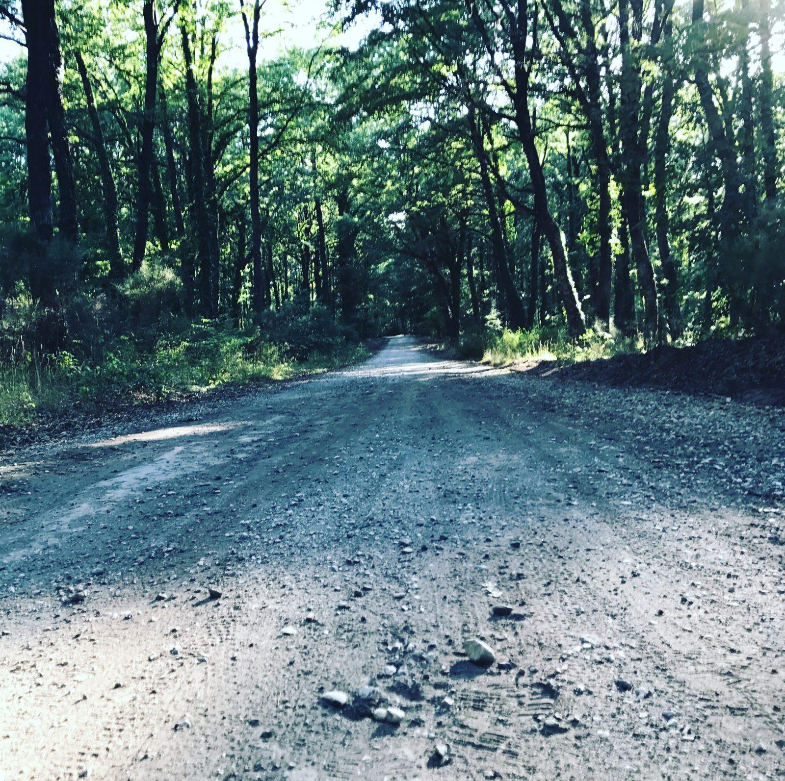 Una strada nel bosco poco prima di Vetralla