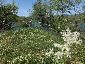 Lago del Turano: vista dalla radura